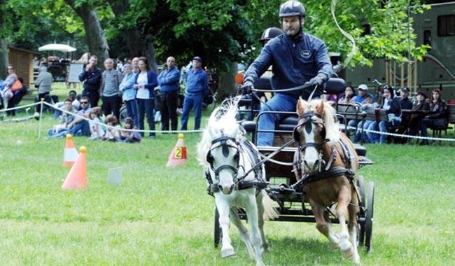 Carrozze e cavalli in Cittadella
