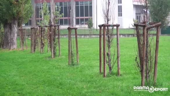 Parco Ferrari: Tanti alberi appena piantati e già morti