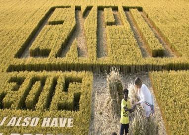 Parmigiano reggiano a Expo, 2 milioni di contatti