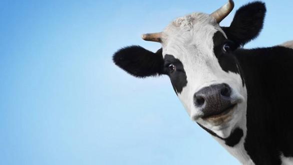 Parmalat, scende l'utile. Guerra del latte: finito l'assedio
