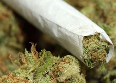 Studente medicina coltiva marijuana: condanna a un anno