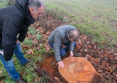 Abbattuti 60 alberi a San Prospero. Multa da 4mila euro