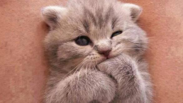 """Riapre il gattile """"Lilli e il Vagabondo"""""""