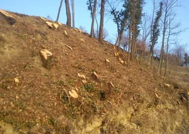 Torrente Parma, patrimonio boschivo rovinato