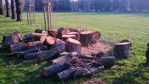 Parco Ferrari: abbattuti 4 alberi e recintati i giochi