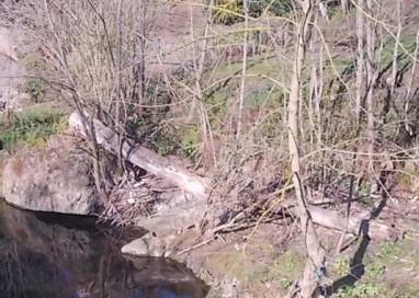 Costamezzana: 70enne travolto dall'albero che stava tagliando