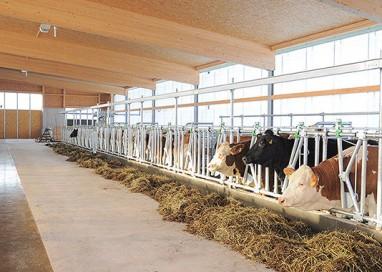 Controlli carne: 3 sanzioni in allevamenti suinicoli