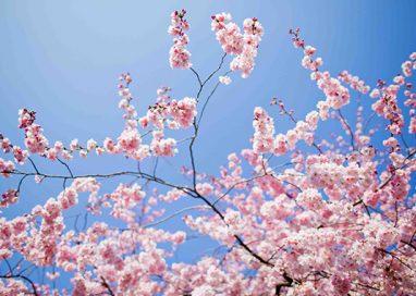 Primo giorno di Primavera, Burian è un ricordo lontano…