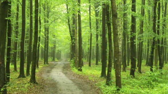 Regione, finanziati 8 progetti nel parmense boschi e biodiversità