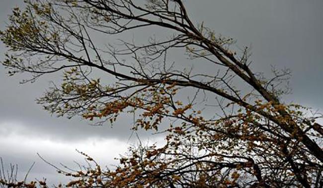 In via Spezia si scivola sulle foglie bagnate. La segnalzione