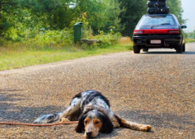 Corniglio, un cane scambiato per un cinghiale viene ucciso