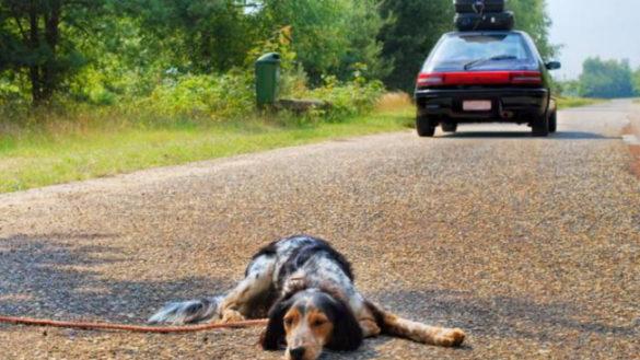 Abbandono di cani, quattro segnalazioni da gennaio a Parma