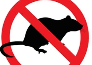 MNC. Emergenza topi continua in Oltretorrente