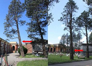 Area verde del cimitero. 28 cipressi malati abbattuti