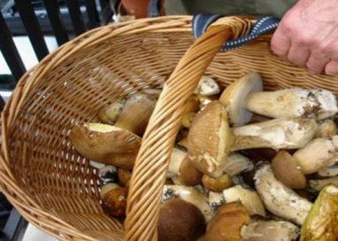Compra funghi porcini invasi da parassiti e finisce al Pronto soccorso