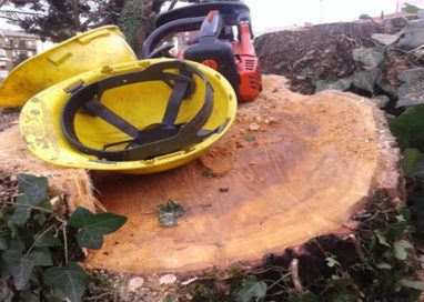 Amministrazione e verde pubblico: sradicati 200 alberi perché sporcano