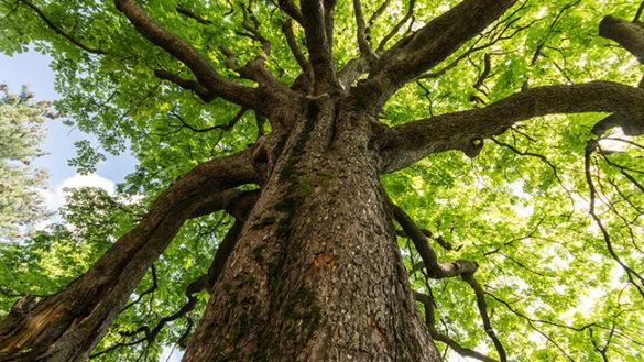 Al via il piano delle potature per il 2017: sono 782 gli alberi interessati