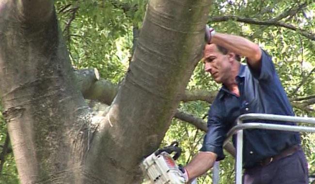 """""""Tristezza per un Comune che considera gli alberi un problema e un costo"""""""