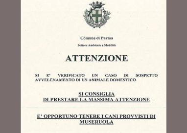 """Animali avvelenati in zona Montanara. Municipale: """"fate attenzione"""""""