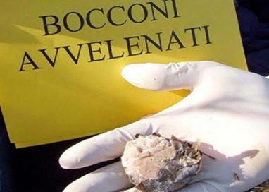 Bocconi avvelenati, campagna informativa per arginare il fenomeno