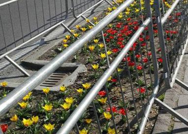 Viale Mariotti, un Lungoparma all'insegna della Primavera