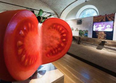 Tomaca Fest: apertura straordinaria, visite guidate e attività per bambini al Museo del Pomodoro