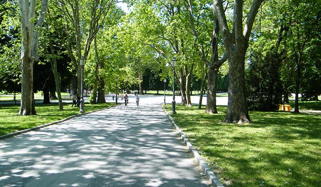 Parco Ducale chiuso per tre giorni: lavori alle alberature