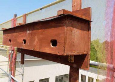 All'Ospedale Vecchio tre posti-nido per i rondoni dell'Africa