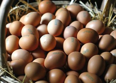 Parma: da carabinieri maxisequestro di 358.440 uova
