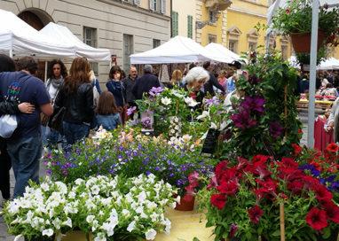 SPECIALE. Profumo di fiori in via Farini il 7 maggio