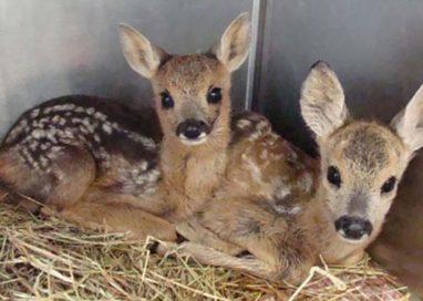 Recupero fauna selvatica ferita: a Parma riapre il bando