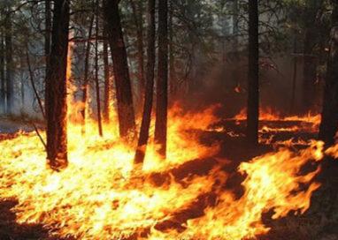 Si ustiona cercando di spegnere un incendio nel bosco