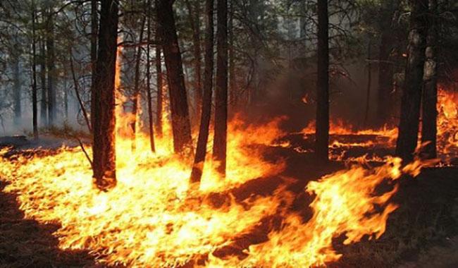 Messina, ancora emergenza incendi La Procura ha aperto un'inchiesta