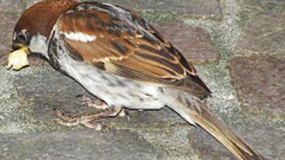 Oltretorrente: Multata perché dava da mangiare a passeri