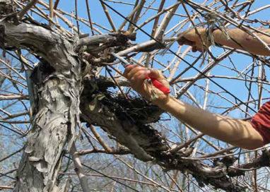 In via Burla abbattuti 27 alberi, ora i responsabili rischiano grosso