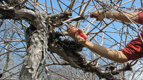 Stradone Martiri della Libertà, l'abbattimento degli alberi è iniziato