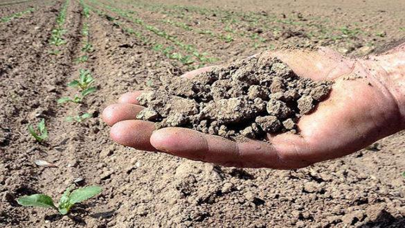 Siccità: gli aiuti del Governo per le imprese agricole danneggiate