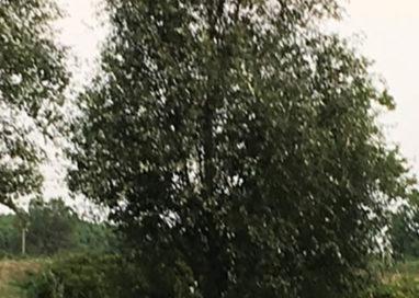 Tragedia sfiorata: 47enne accoltellato al parco dei Vetrai