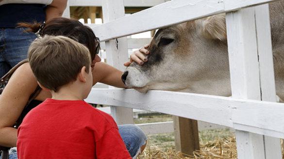Torna il Rural Festival. Il 2 e 3 settembre a Rivalta di Lesignano