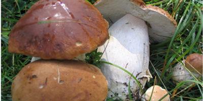 fiera del fungo