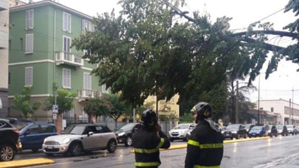 Paura in via Gramsci: albero cade in strada e blocca il traffico
