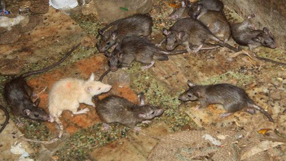 San Leonardo: bambini vivevano in mezzo a grossi topi