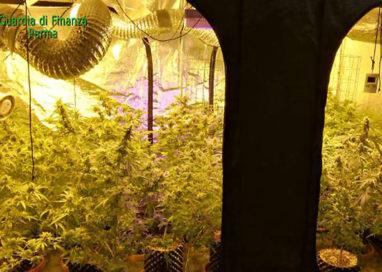 Coltiva marijuana in un garage: 26enne in manette