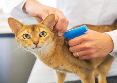 Dal Comune microchip gratis per i gatti