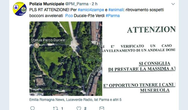 Bocconi avvelenati trovati tra Parco Ducale e Ponte Verdi