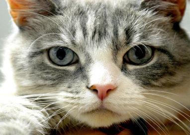 Prelevano gatti spacciandosi per guardie zoofile