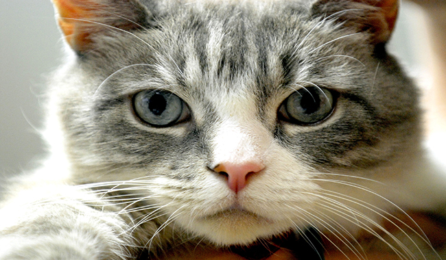 A Parma microchip gratis per i gatti l'11 novembre