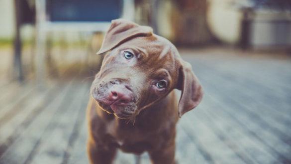 Leishmaniosi, al via controlli sanitari su oltre 100 cani