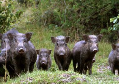 Agricoltura: risarcimenti dei danni causati da animali selvatici