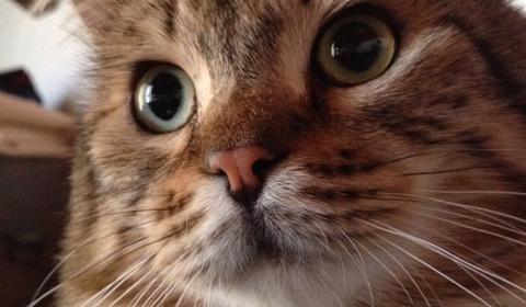Sei gatti spariti in una frazione di Collecchio